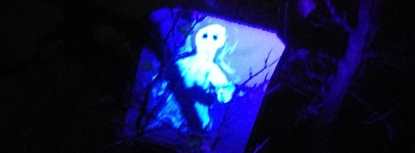UV Bild bei Schwarzlicht im Baum